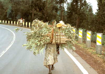a woman carrying wood in ethiopia