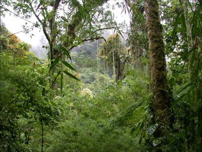http://www.earthinstitute.columbia.edu/news/2005/images/forest_400.jpg