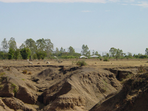 In western Kenya, soil erosion causes large gullies to form