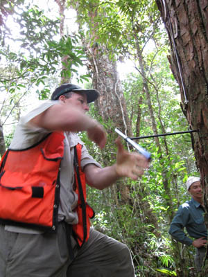 Tree-ring scientist Brendan Buckley of Columbia University's Lamont-Doherty Earth Observatory extracts a core of wood from an ancient fokienia hodginsii tree in Bidoup Nuiba National Park, Vietnam