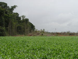 Clearing for large-scale agriculture, Mato Grosso, Brazil