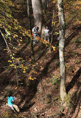 Researchers in southern Appalachia investigate a tulip poplar tree thought to be about 300 years old.