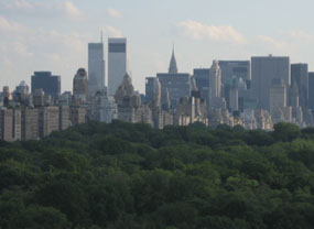 Seedlings did eight times better in New York City's Central Park than at comparable suburban and rural sites.