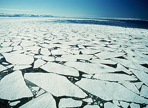 Arctic sea ice formation feeds global ocean circulation.