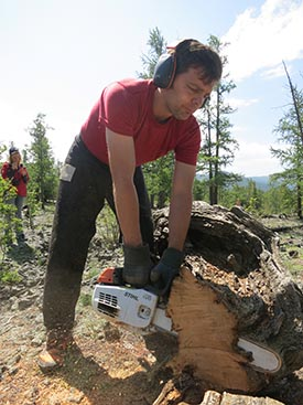 Annual tree rings vary in relation to moisture and temperature, and can be read like a book. Study co-leader Neil Pederson takes a cross section from a dead tree that may be well over 1,000 years old.