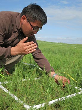 More rainfall means more grass, which would mean more war horses for Mongol cavalry. Ecologist Byambasurem Oyunsanaa plots plant abundance on the modern steppe.