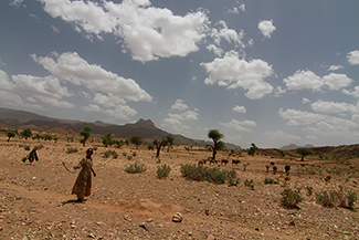 A new study projects that much of Ethiopia, Somalia and Djibouti in the Horn of Africa will grow drier as global warming progresses. Here in northern Ethiopia, herders often already struggle to make a living.