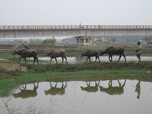 The region is built on the world's largest river delta, and water is everywhere. Widespread poverty, soft sediments and rapidly multiplying infrastructure including bridges like this one near the southern city of Khulna make the region exquisitely vulnerable to earthquakes. (Kevin Krajick/Lamont-Doherty Earth Observatory)