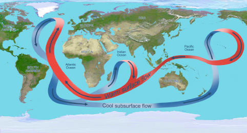 The global ocean overturning circulation, shown here in a simplified illustration, distributes heat through the oceans. In the Atlantic Ocean, the circulation carries warm water (red arrows) northward near the surface and cold deep water (blue arrows) southward. Credit: NASA/JPL