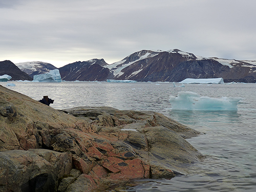 Bedrock drilled from deep under the Greenland ice sheet contains evidence that the island was nearly denuded of ice for an extended time during the last million years.  Here, icebergs discharged from Allison Glacier float near Kullorsuaq, western Greenland.