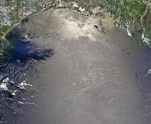 Surface slicks of oil in the Northwestern Gulf of Mexico appear as white features in the center of the image. The Bird's Foot Delta of the Mississippi River and New Orleans are to the top right of the image, derived from NASA's MODIS Aqua sensor. CREDIT: NORMAN KURING/NASA GSFC.