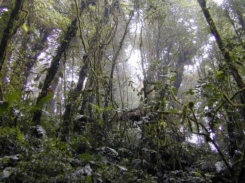 earth institute at columbia university: